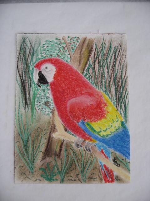 Un perroquet ara centerblog - Dessiner un perroquet ...